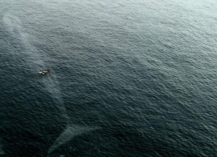 animales y peligro en el mar